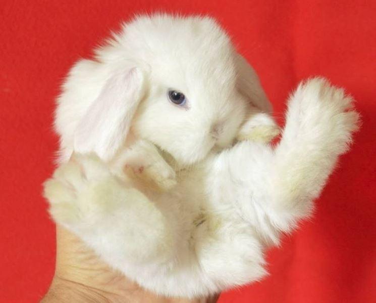 Alimentazione coniglio nano conigli nani consigli per - Lettiera coniglio nano ...