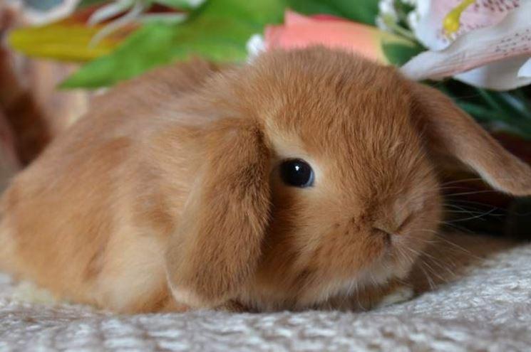 Tenero cucciolo di coniglio nano ariete