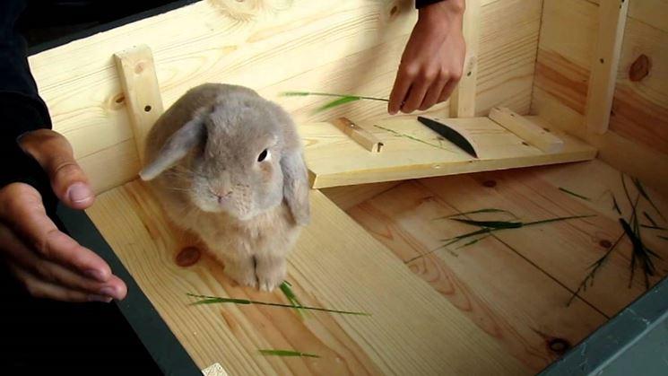 Coniglio nano prezzo