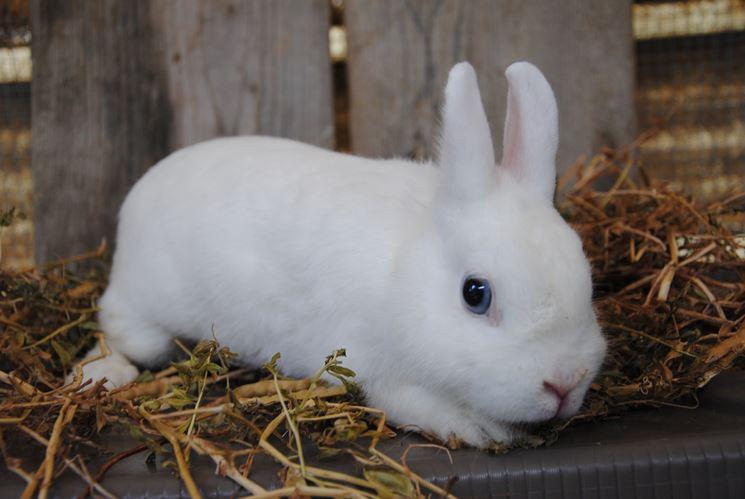 Gabbia coniglio nano conigli nani gabbia coniglio nano for Bloccare i piani domestici