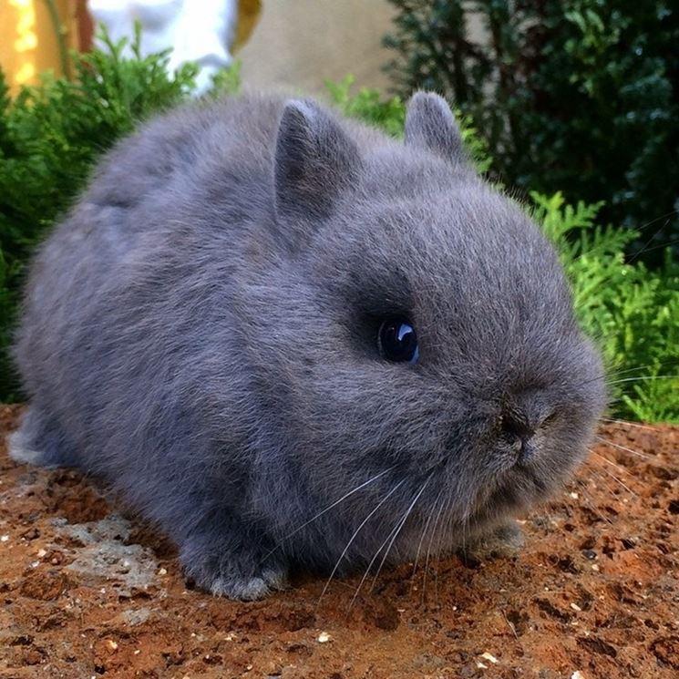 Gabbia coniglio nano conigli nani gabbia coniglio nano for Piccoli piani domestici vittoriani