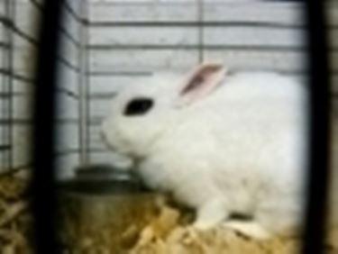 Gabbie conigli nani conigli nani - Lettiera coniglio nano ...