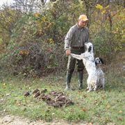 Cani da caccia con cacciatore