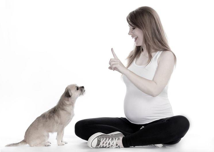 addestrare un cane
