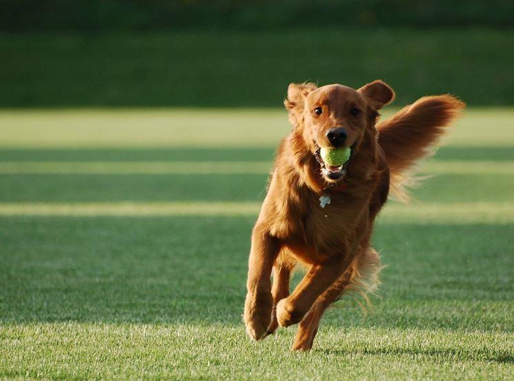 un cane addestrato