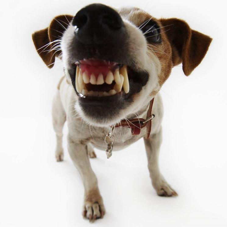 cane aggressivo