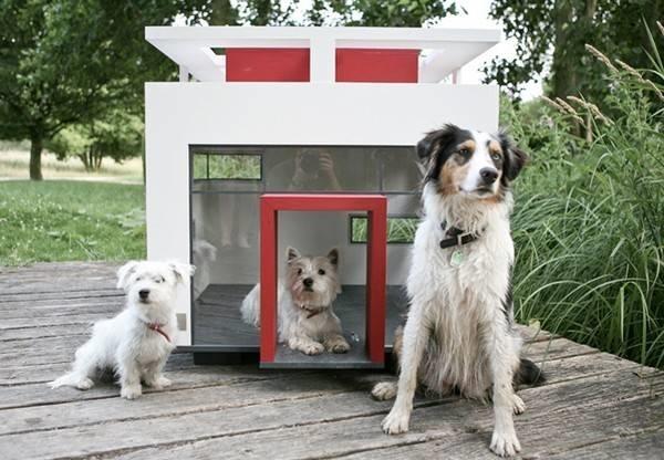 Cani da appartamento addestramento cani