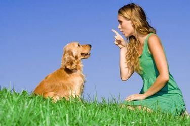 Con un cucciolo in casa, serve grande attenzione e determinazione