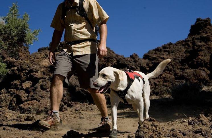 Insegnare al vostro cane a vivere in mezzo agli altri lo renderà ancora più felice