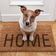 cagnolino benvenuto a casa!