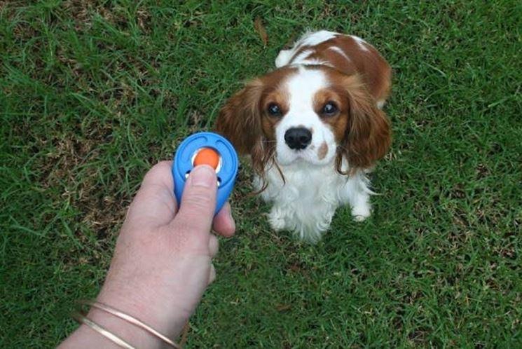 addestramento di un cucciolo di cane