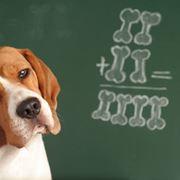 scuola per cani