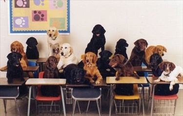 scuola per cani1