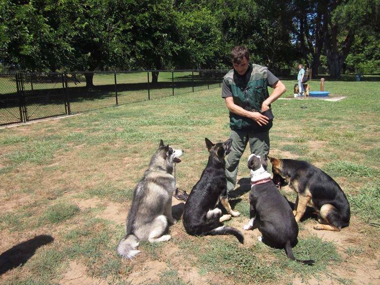 Addestrando più cani allo stesso tempo
