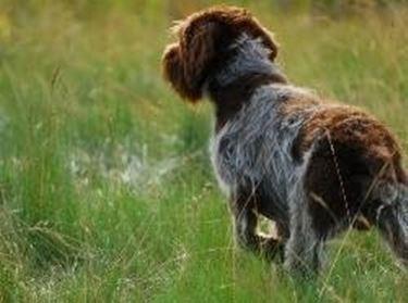 Allevamenti cani da caccia