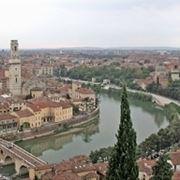 Allevamenti cani Verona