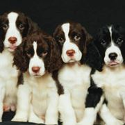 allevamenti cani