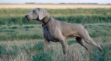 Allevamento cani caccia
