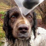 Allevamento Cani da tartufo