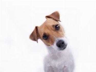 Allevamento cani veneto