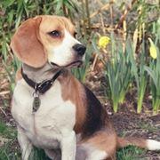 Aprire allevamento cani