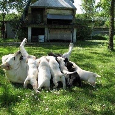 lavoro in allevamento cani