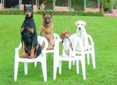 test cani