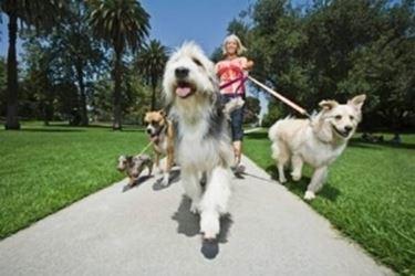 Allevatori cani corso