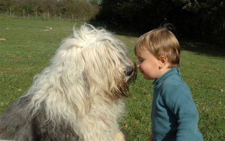il Bobtail ama i bambini