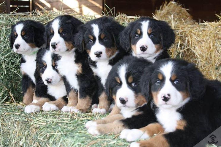 gruppo di cuccioli