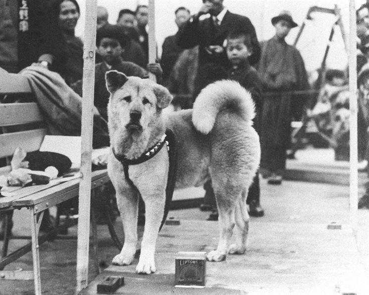 Immagine del vero Hachiko