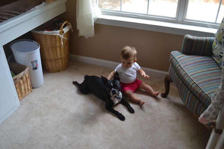 Boston terrier con un bambino