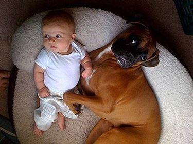 Boxer con bambino