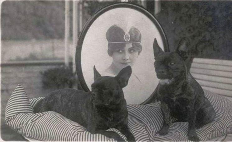 Foto antica di bulldog francesi