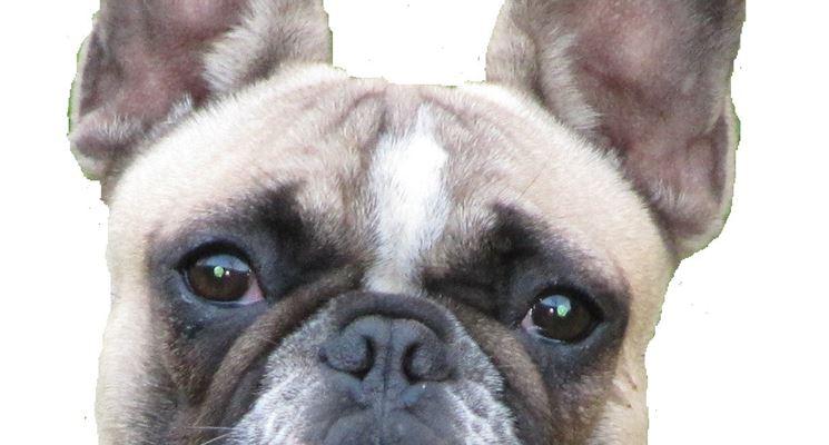 Esempio specifico di orecchie cosiddette