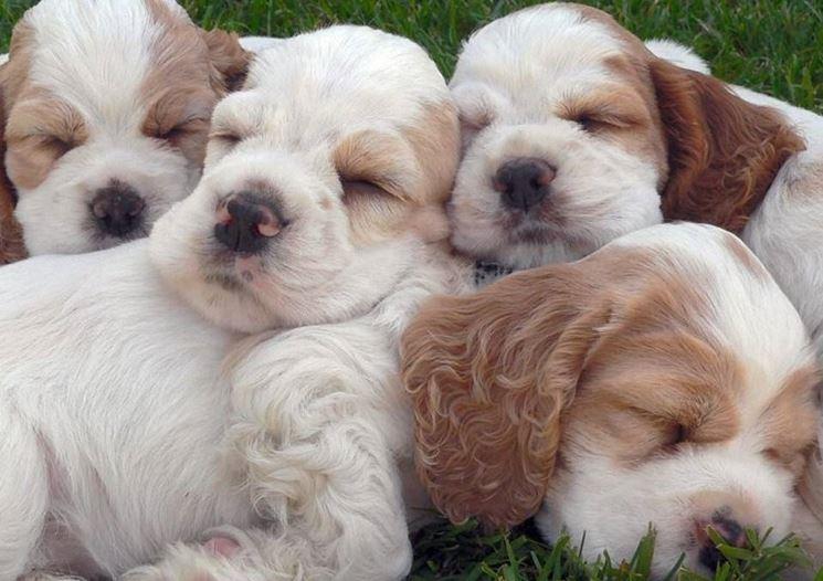 Teneri cuccioli pluricolore