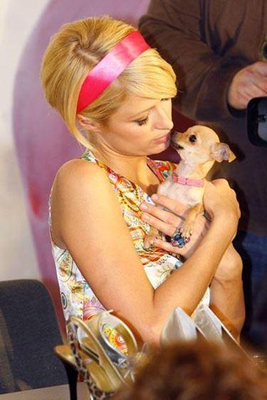 Paris Hilton con il suo adorato tinkerbell