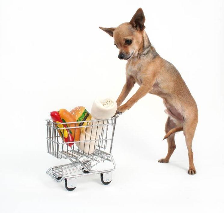 Una foto scherzosa di un chihuahua che fa la spesa.