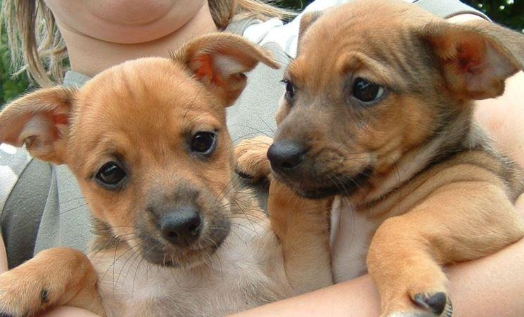 Coppia di cuccioli
