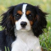 cane piccola taglia
