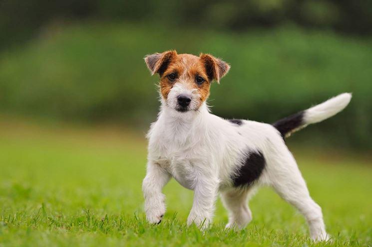 Le diverse caratteristiche del cane