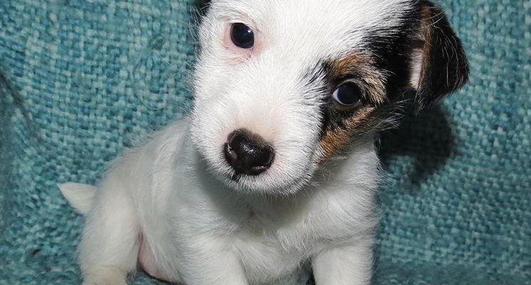 Un cucciolo di poche settimane.