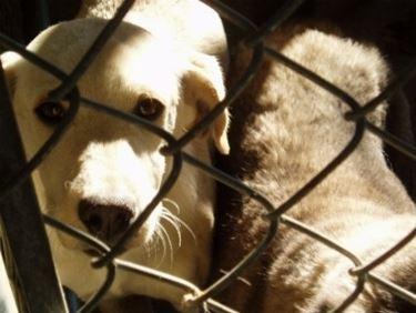 Adottare cane canile