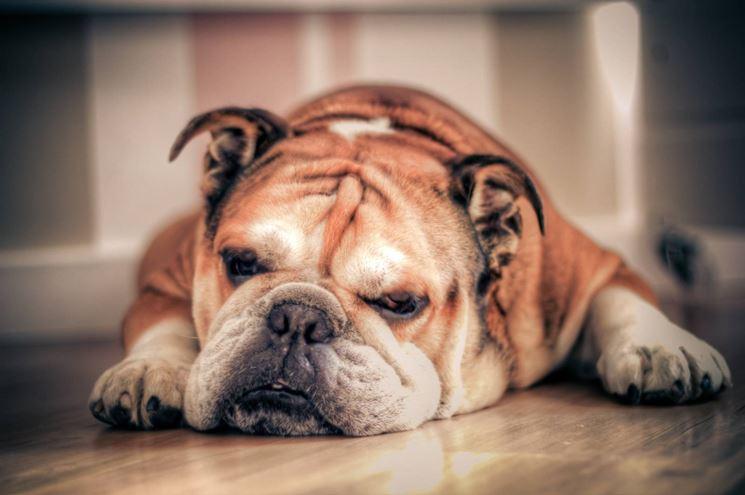 espressione del bulldog