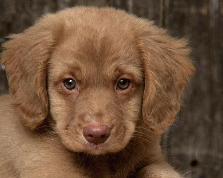 Cani Cuccioli Da Adottare Canile Cani Cuccioli Da
