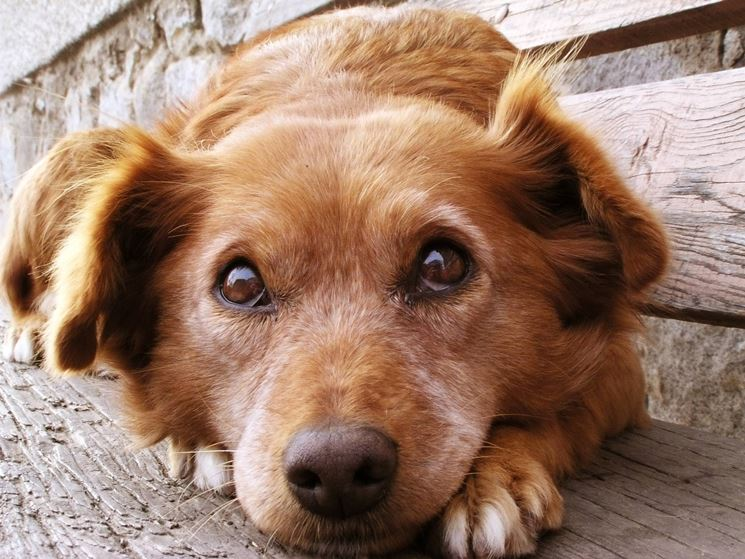 adottare cani