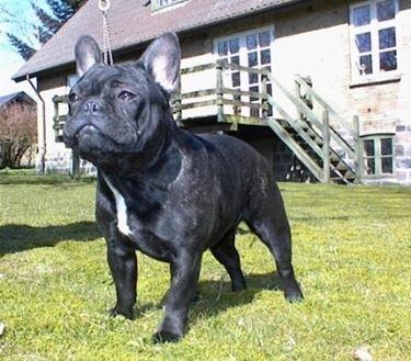 Cani di razza in canile
