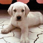 Cuccioli canile Milano