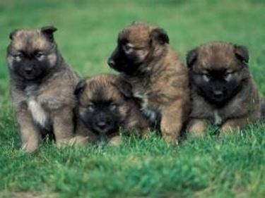 Cuccioli in canile