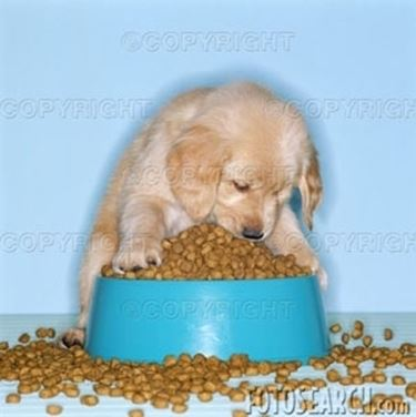 cani alimentazione cibo